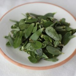 Portulak Saatgut (Portulaca oleracea sativa)