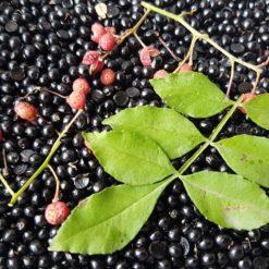 Szechuan-Pfeffer Samen und Blatt